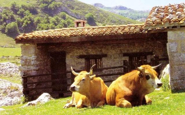 Скотоводство в Астурии