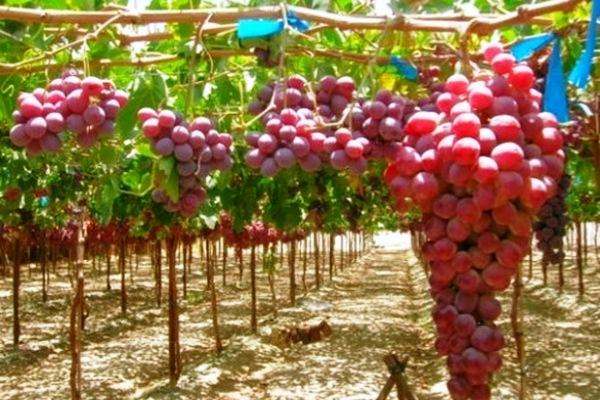Испанские вина DOC Rioja в России