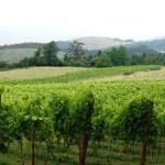 DO Txakoli de Vizcaya ожидает большого урожая винограда