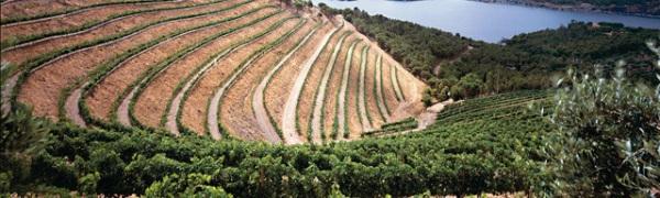 Эмпорда присоединилась к винным маршрутам в Испании
