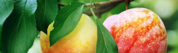Испанские фрукты: что и где растет