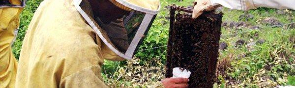 В Галисии пройдет Конгресс пчеловодов Испании