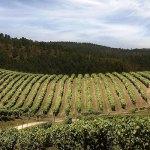 На испанских виноградниках Террас Гауда будут установлены международные датчики