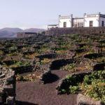 Канарские вина укрепляют позиции на международном рынке