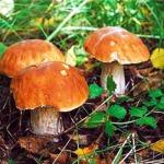 Сеговия организовала образовательные грибные прогулки