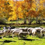 Арагонские овцы могут оказаться под угрозой исчезновения