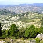 Андалусия выпустила 1,7 млн оливкового масла в 2013-2014 годах