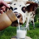 В Испании увеличились цены на молоко, несмотря на его перепроизводство