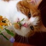 26 фактов о кошках